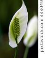 梦之岛热带温室圆顶 白鹤 植物园 333049