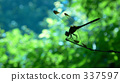 dragonfly, calm, wing 337597