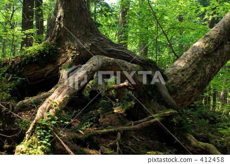 Tangled trees 412458