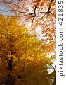 銀杏 銀杏樹 楓樹 421835