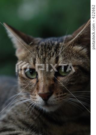 cat, pussy, lingering summer heat 422662