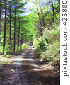 Forest Road Roadside Road Mountain Road Climbing Road 425880