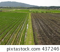 Paddy field 437246