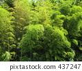 Bamboo grove 437247