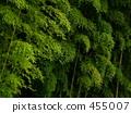竹森林在雨天 455007