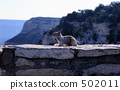Resident of the Grand Canyon 502011