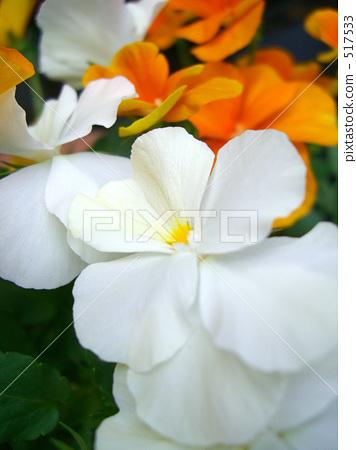 White flower 517533