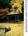 銀杏 銀杏樹 楓樹 535532