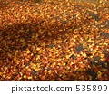dead, leaf, dry 535899