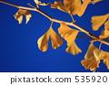 하늘, 은행, 나무 535920