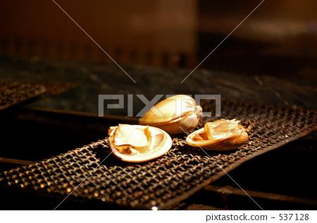 clam 537128