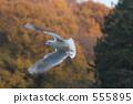 紅嘴鷗 候鳥 鳥兒 555895