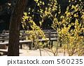 แปลงดอกไม้,ฤดูหนาว,ดอกไม้ 560235