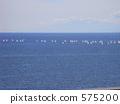 一组游艇 575200