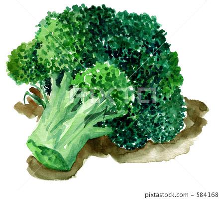 broccoli 584168
