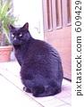 แมว,แมวอ้วน,แมวดำ 609429