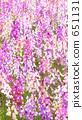 꽃밭, 꽃, 다채로운 651131