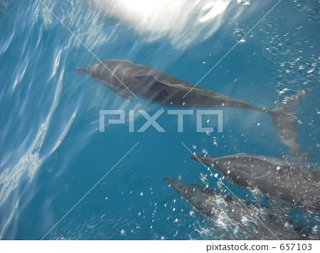 dolphin, dolphins, blue water 657103