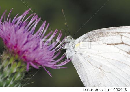 butterfly, butterflies, plant 660448