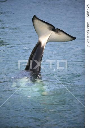 A killer's tail 666423