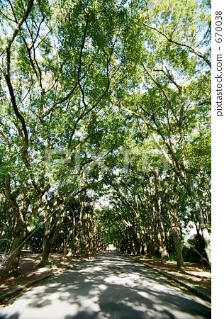 植物園樹木 670038
