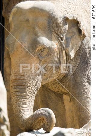 인도 코끼리 업 671699