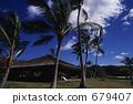 Palm tree pleasing with the wind (Hawaii Island) 679407