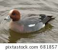 Hydrigamo (นกป่า) 681857