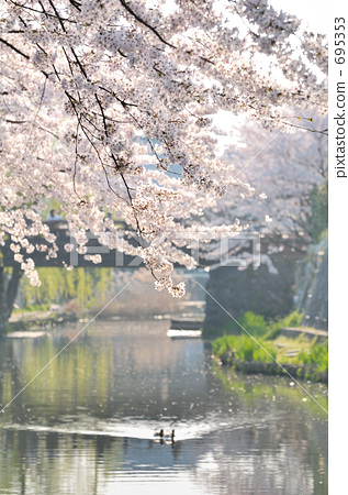 Mizuto Sakura 1 695353