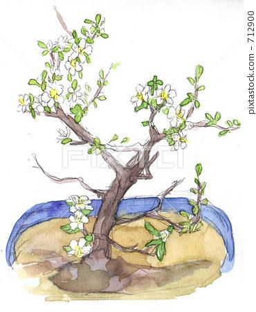 bonsai, shrub, shrubs 712900