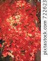 Autumn leaves 722623
