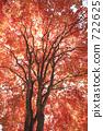 Autumn leaves 722625