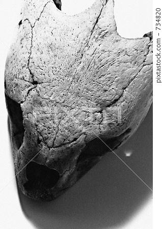海龜 骨頭 骨骼 734820