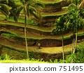 terraced, rice-fields, rice 751495