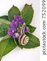 Hydrangea and snail 2 752099