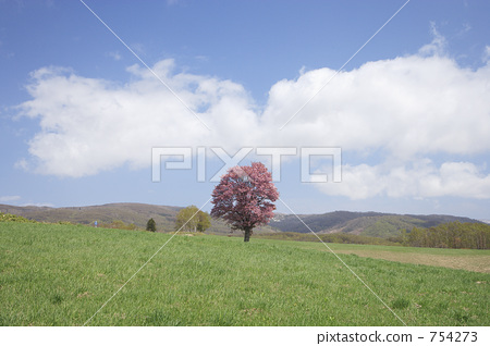 natural scenery, vast, ippongi 754273