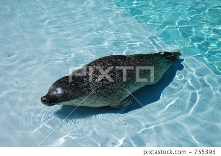 Seal of Asahiyama Zoo 755393