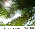 coconut, palm, sunshine 766308