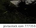 麦萤火虫 777356