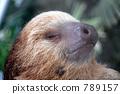 Utamagago's lid Yubi sloth 789157