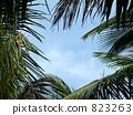 Palm frame 823263