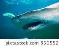 鲨鱼 水生的 水下 850552