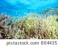 蓝绿色小热带鱼 分叉珊瑚 鱼群 864435