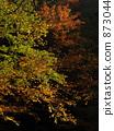 단풍, 가을, 자연 873044