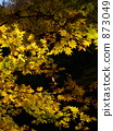 단풍, 가을, 자연 873049