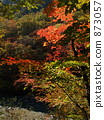 단풍, 가을, 자연 873057