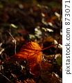 낙엽, 단풍, 가을 873071