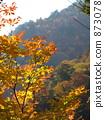 단풍, 가을, 자연 873078