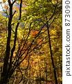 단풍, 에히메, 가을 873090