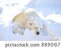 Snow Polar Bear 889067
